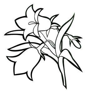 Kolokolchik-tsvety
